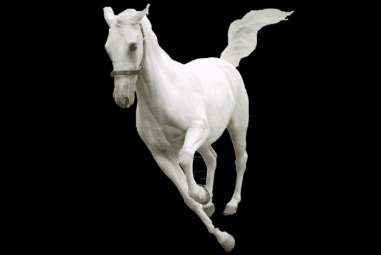 horseWellBeingBarnham